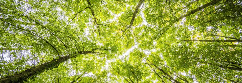 Salve a floresta